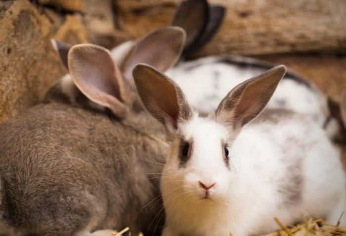 DIY Rabbit Feeder - Stone Family Farmstead