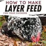 chicken - How to Make Chicken Layer Feed - Stone Family Farmstead