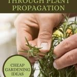 How to Get Free Plants from Your Plant Cuttings - Stone Family Farmstead