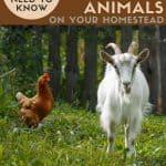 Keeping Small Farm Animals on Your Homestead - Stone Family Farmstead