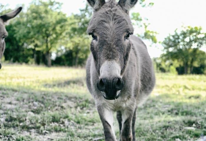 donkey - Benefits of Creating Your Own Mini-Farm - Stone Family Farmstead