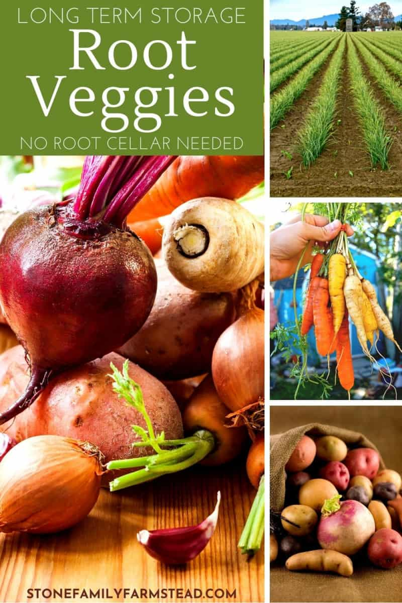 various photos of root vegetables - Easy Root Vegetable Storage Ideas That Need No Root Cellar - Stone Family Farmstead