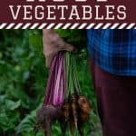 person carrying a bunch of root vegetables - Easy Root Vegetable Storage Ideas That Need No Root Cellar - Stone Family Farmstead