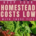 How to Keep Your Homestead Costs Low - Stone Family Farmstead