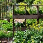 How to Grow Food in a Small Vegetable Garden - Stone Family Farmstead