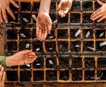 How to Start Vegetable Seeds Indoors for Best Results - Stone Family Farmstead