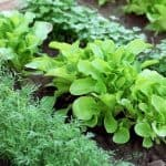 How to Start a Vegetable Garden from Scratch - Stone Family Farmstead