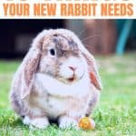 Top 10 Things to Bring Home with Your New Pet Rabbit - Stone Family Farmstead