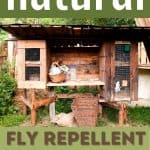 How to Use a Natural Fly Repellent (or more than one) in the Rabbit Hutch