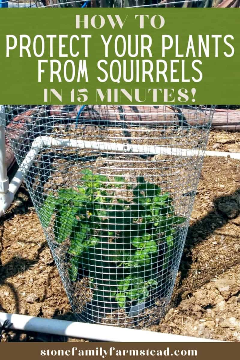 How to Protect Your Plants from Critters in 15 Minutes - Stone Family Farmstead